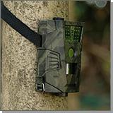 Филин HT-001 фотоловушка на дереве