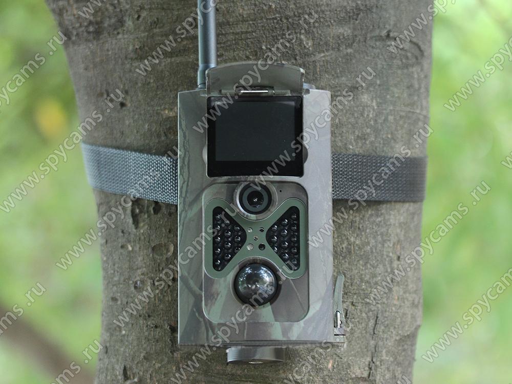фотоловушка Филин для охоты